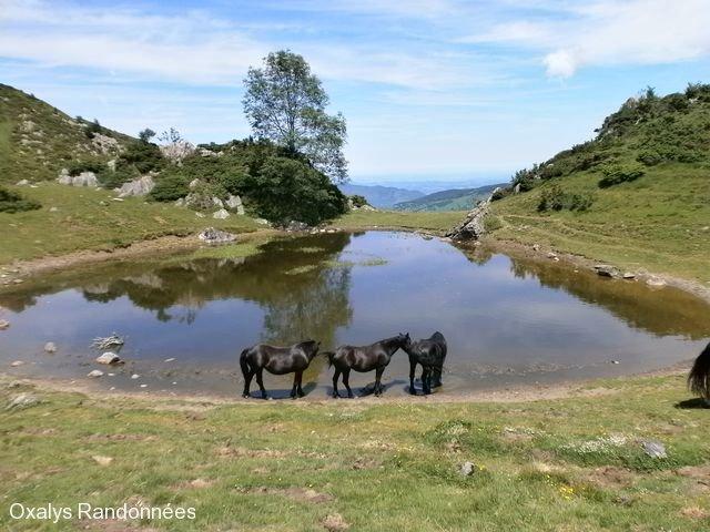 bivouac pyrénées etang chevaux