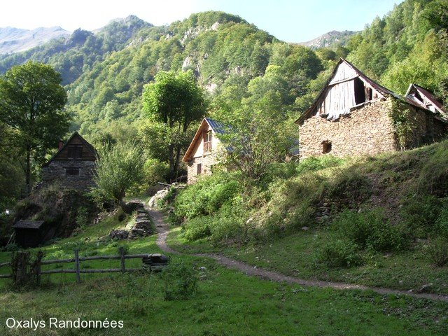 brame-cerf-pyrenees12