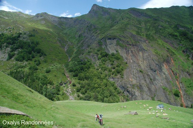 brame-cerf-pyrenees3