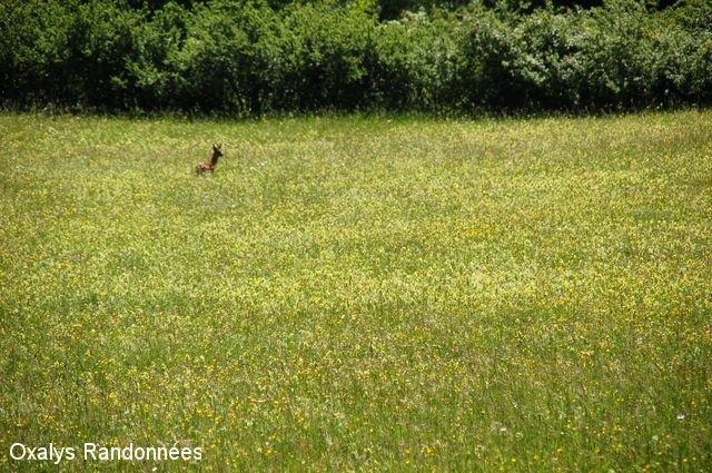 ecogite - randos nature- faune