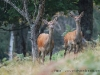 animaux-pyrenees