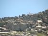 Trekking-pyrenees-valier-isards