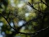 ecogite - randos nature - insectes