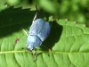 ecogite Vacances famille insectes