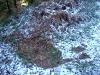 grande faune raquettes pyrenees couche