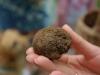 rando-perigord-noir-truffe-gourmande