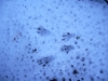traces-neige-pyrenees