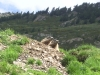 trekking-pyrenees-retrouvance-vicdessos-marmottes