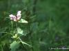 voyage-scientifique-pyrenees-cnrs-biodiversite
