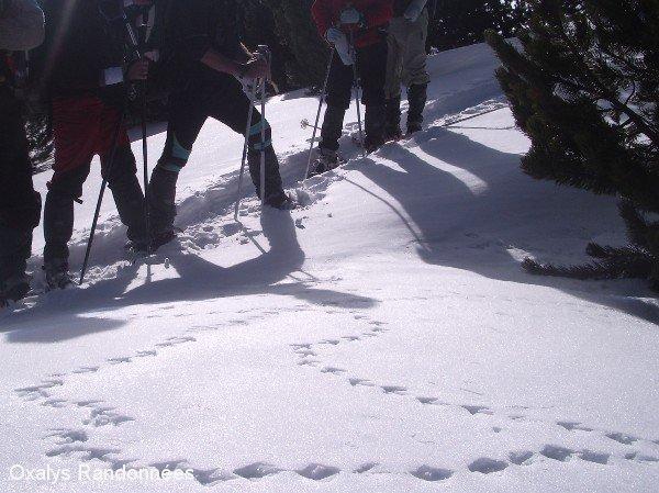 5 Trek Boulliouse Campo