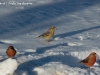 raquette hiver faune pyrenees bes croise