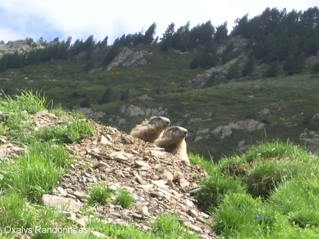 trekking-pyrenees-retrouvance-vicdessos-marmottes