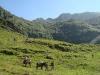 rando ane pyrenees ayes