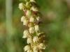 vacances famille pyrenees paques decouverte flore