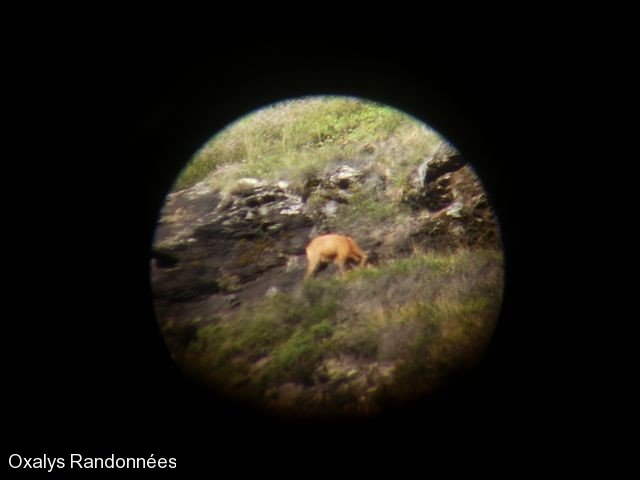 rando-observation-faune-valier4